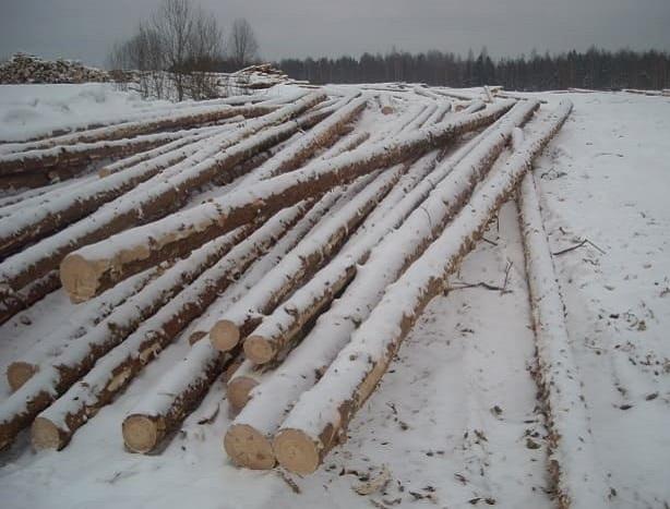 Заготовка Чухломского леса
